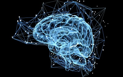 Faculties of Science and Health launch undergraduate Neuroscience program